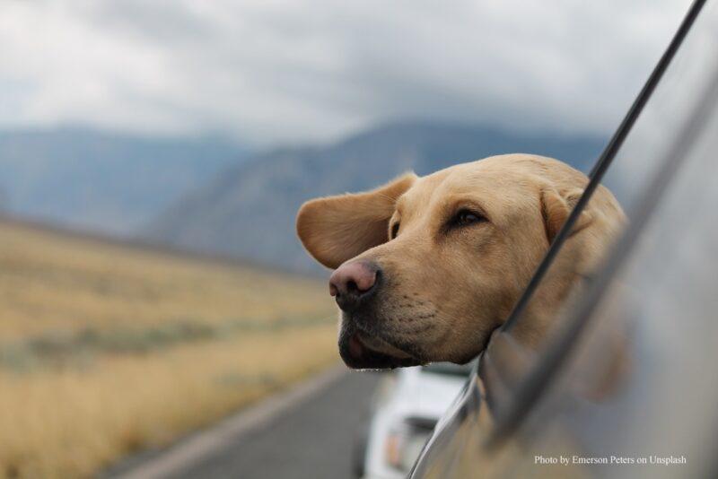 Hund Im Auto Unsplash Emerson Peters