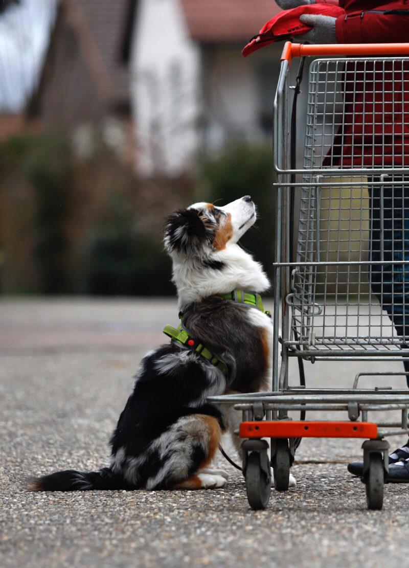 Fuer junge assistenzhund azubis ist ruhiges warten eine wichtige uebung 2