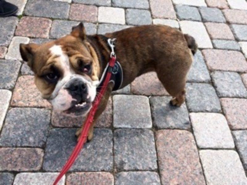 Parasitäre Hauterkrankungen Wenn Der Hund Plötzlich Mehr Als Vier
