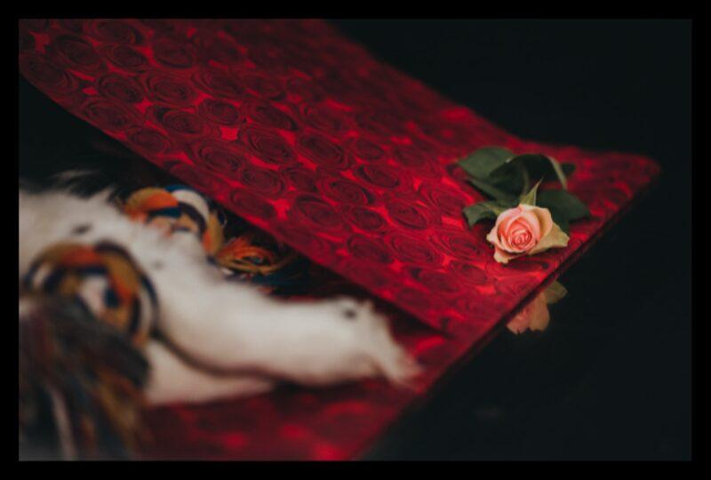 Rose 1 Abschiednahme 1