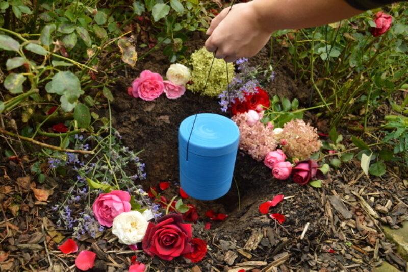 Rose 4 Abb Mensch Tier Friedhof