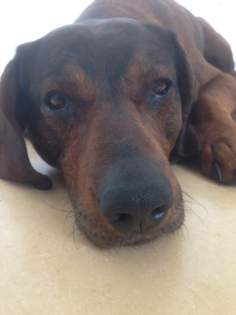 Pain dog depressed