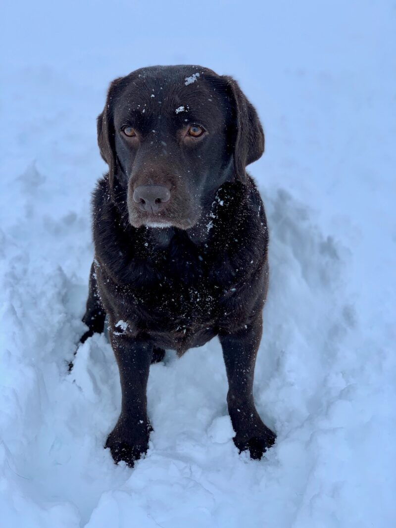 Frieda Schnee