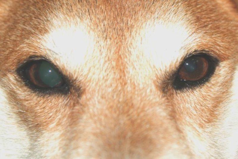 erweiterte pupillen