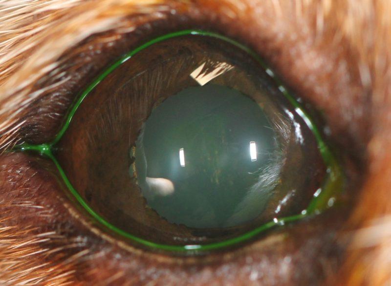 5 Hornhaut abgeheilt Fluorescein negativ