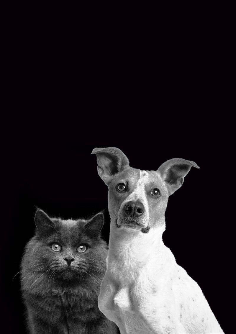 CAT DOG Jack Composing Black BG