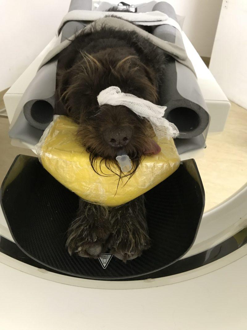Patient Im Ct 1