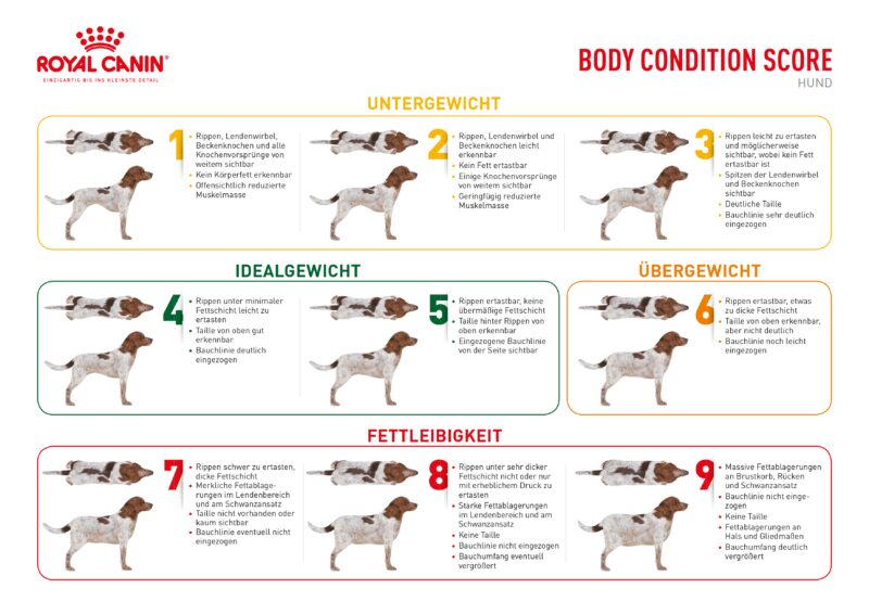 BCS Body Condition Score Hund 297x210 Web