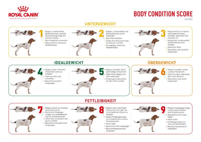 BCS Body Condition Score Hund 297x210 Web