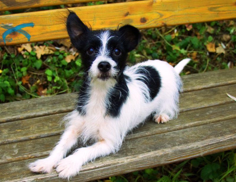 Gruber 3 Kiri The Dog Side Of Life