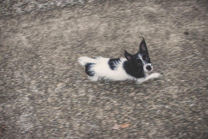 Gruber 2 Kiri The Dog Side Of Life