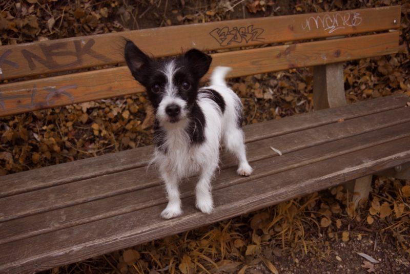 Gruber1 Kiri The Dog Side Of Life