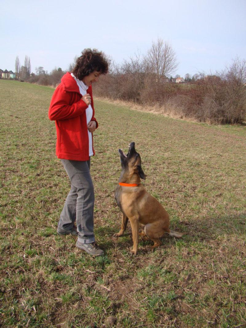 Hebel 5 4 Hebel Mit Problemhund