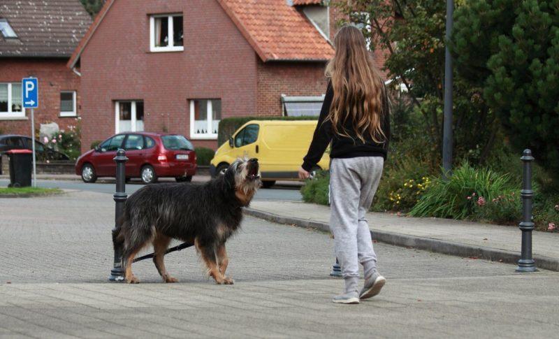 Ana Kidsanddogs 339 Preview Z