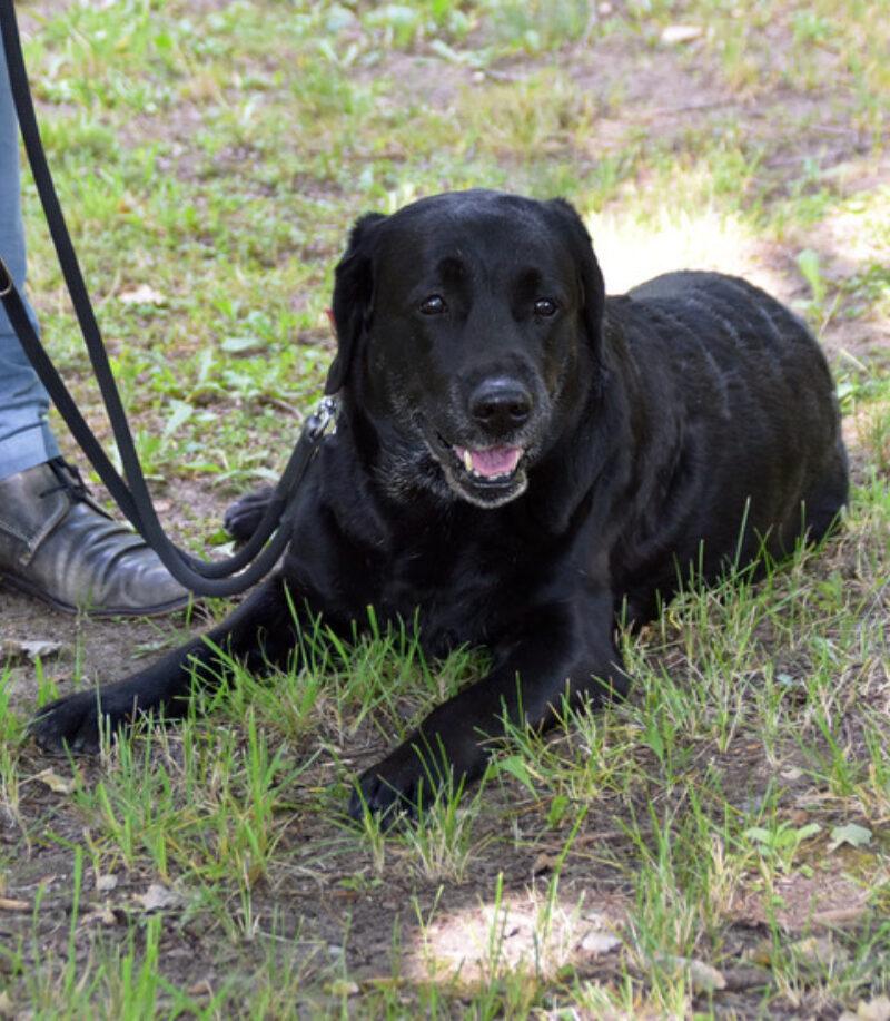 PM200723 Coronaschnueffelnde Hunde Hund