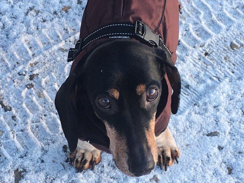 Alf Im Schnee