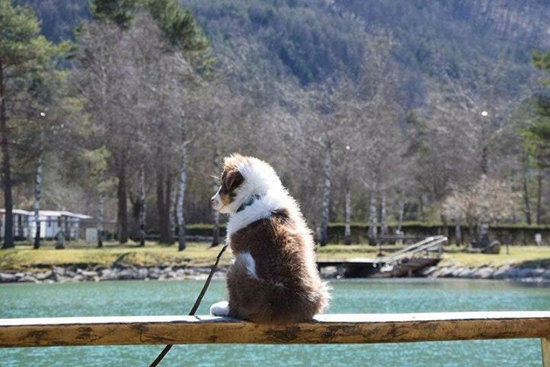 Camping Rosental Roz Ein Hund der auf das Wasser schaut