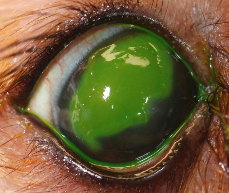 LEU 2 Hornhaut Ulcus Fluorescein positiv