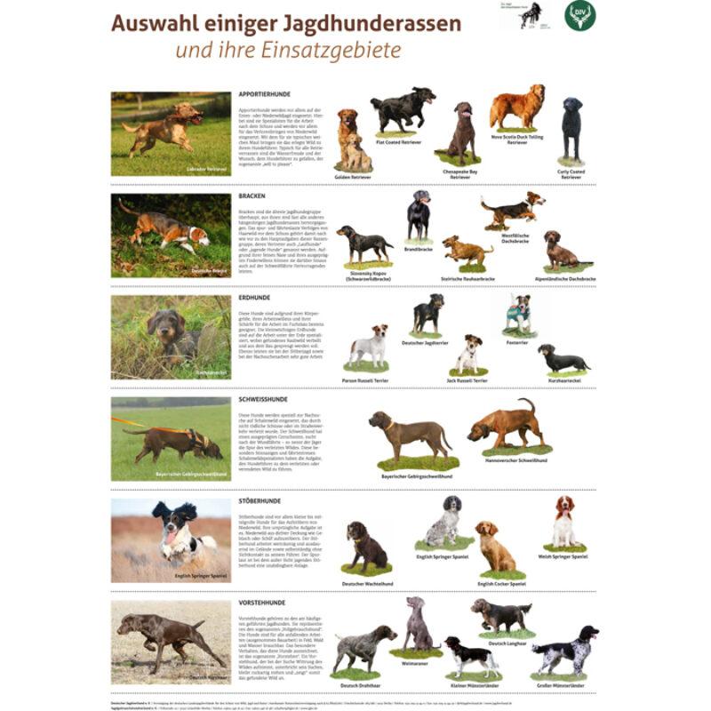 Poster  Jagdhunderassen
