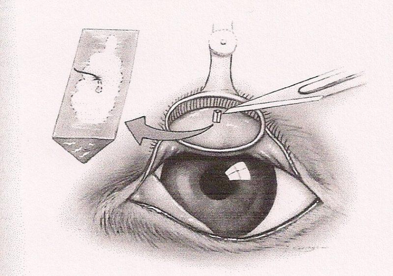 Slatters Veterinary Ophthalmology