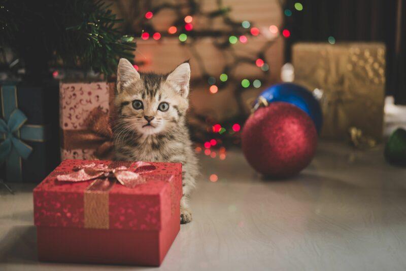 Weihnachten Katze Lalalululala Fotolia Com