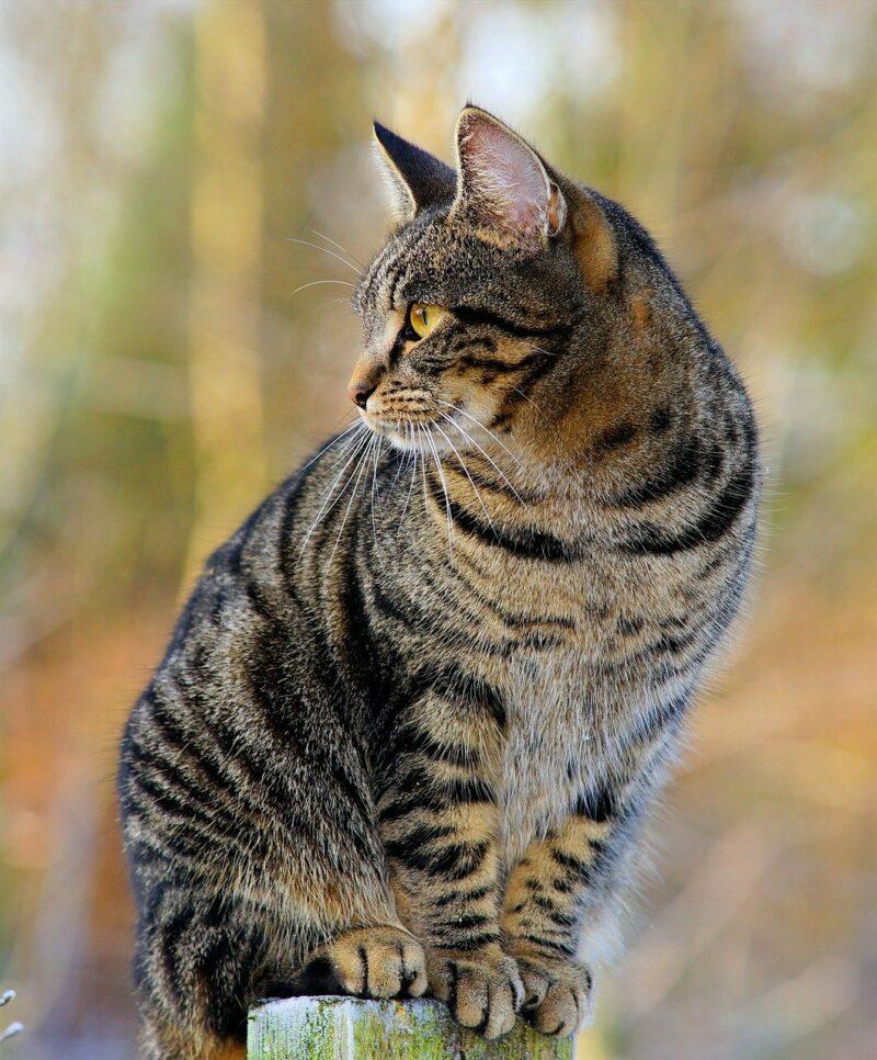 Cat 1940487 1280