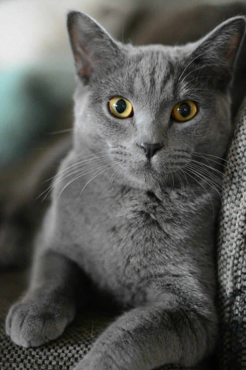 Cat 2528935 1920