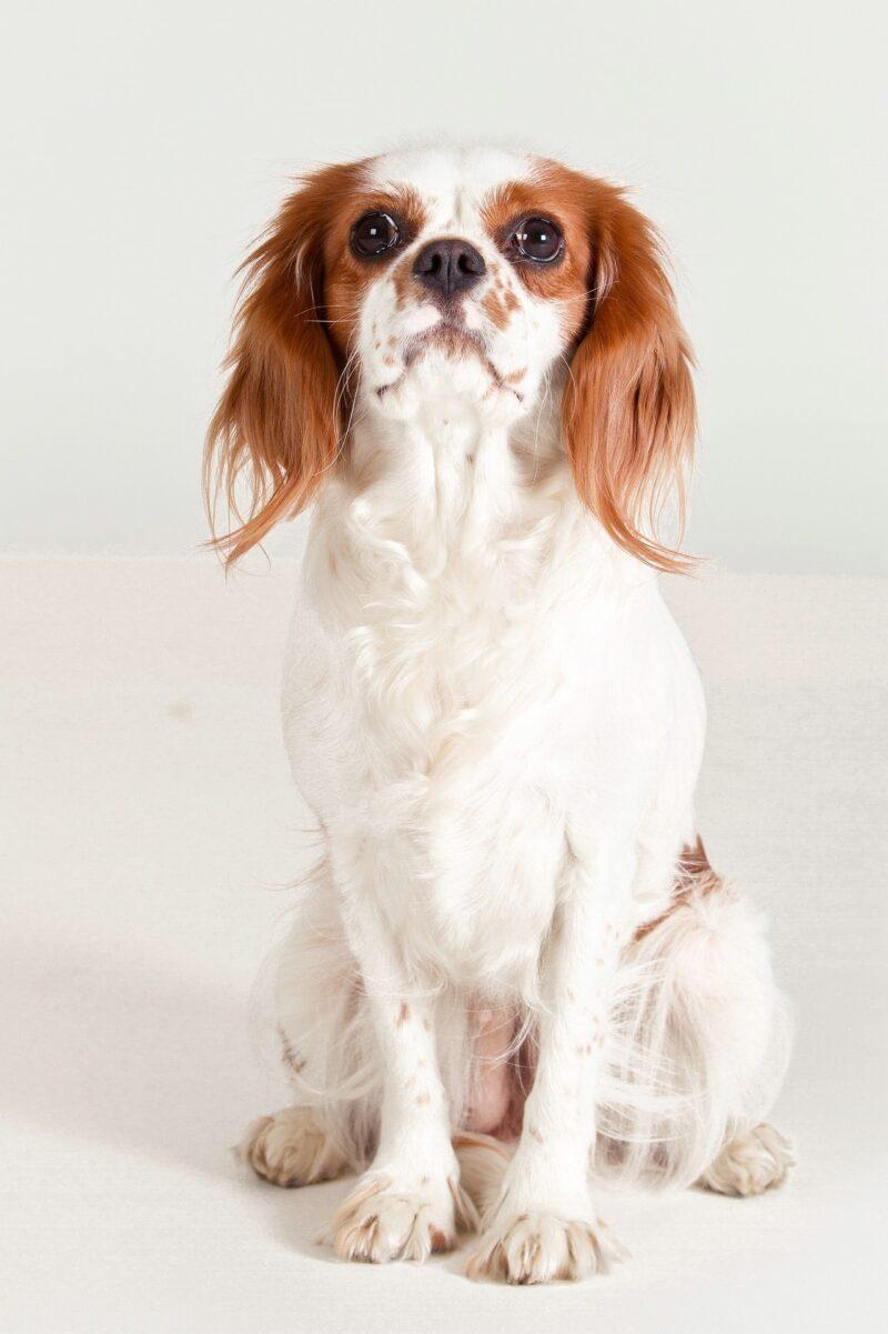 Dog 1272852 1920