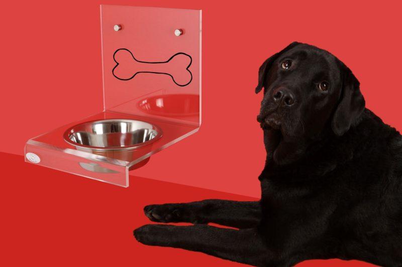 Dog bowl 2006373 1920