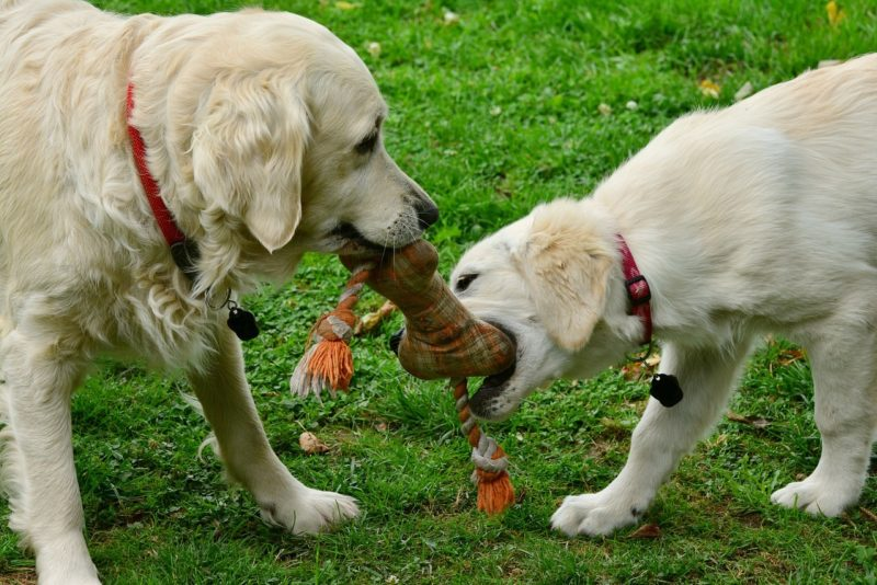 Dogs 2556820 1280