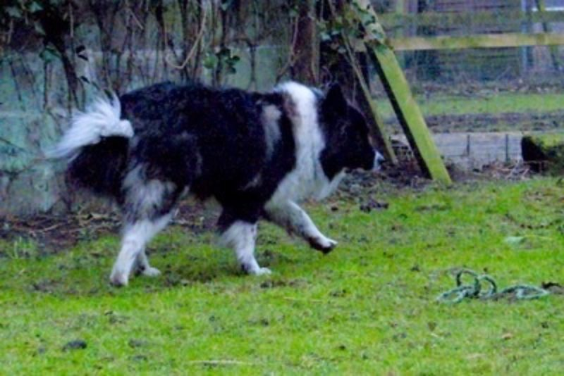 Mack3 Www Canis Kynos De 1