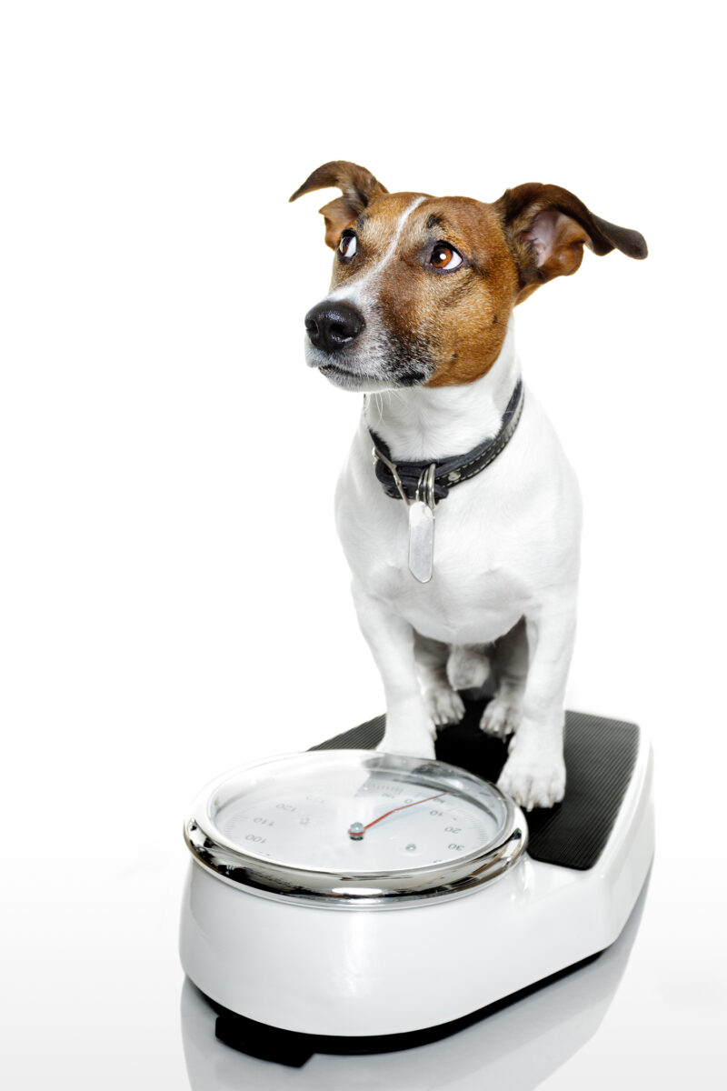 Vc 4 Hund Waage low