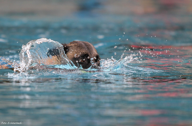 Hundeschwimmen Köln