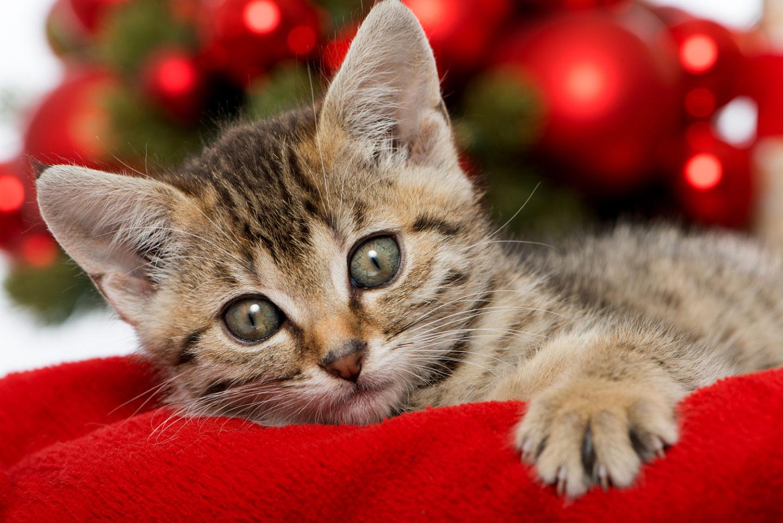fotoaktion das sch nste tierische weihnachtsbild. Black Bedroom Furniture Sets. Home Design Ideas