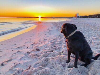 Sonne am Stand mit Hund