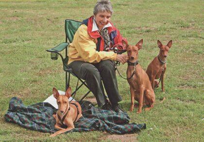 Maplus Hunde