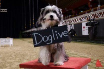 Doglive Dogin 5 300X199