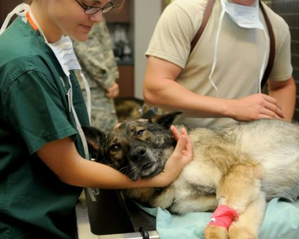 Veterinary 85925 1280