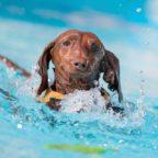 Kölner Hundeschwimmen